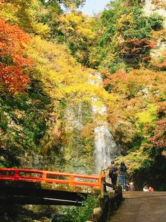 紅葉,大阪,もみじ,滝,ハイキング,箕面,関西,おでかけ,阪急,箕面の滝,紅葉狩り,箕面の滝道