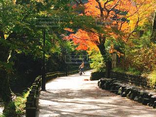 女性,紅葉,大阪,もみじ,滝,楽しい,ハイキング,箕面,関西,おでかけ,阪急,箕面の滝,紅葉狩り,箕面の滝道
