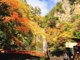 紅葉,大阪,もみじ,ハイキング,箕面,関西,おでかけ,阪急,箕面の滝,紅葉狩り,箕面の滝道