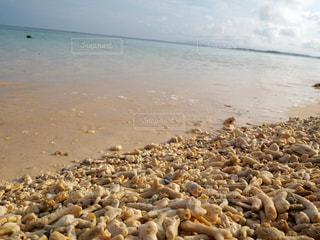 海,砂浜,沖縄,旅行,珊瑚