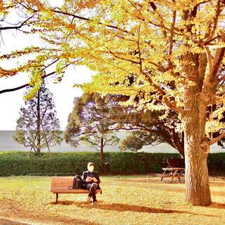 秋,読書,銀杏,銀杏並木,読書の秋
