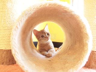 子猫の写真・画像素材[1201438]