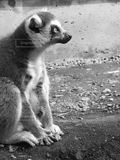 動物の写真・画像素材[834621]