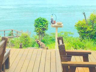 自然,野生動物,海の見えるカフェ