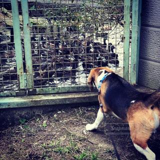 フェンスの前に立っている犬 - No.751475