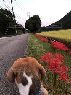 道の端に座っている犬 - No.769634