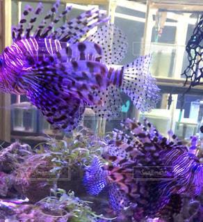 水玉の魚の写真・画像素材[2481492]