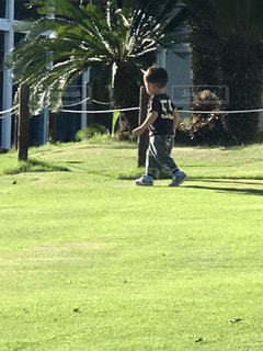 緑の芝生の上で走る走る!の写真・画像素材[2513845]