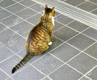 猫の写真・画像素材[2601234]