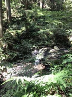 岩門の滝にての写真・画像素材[2625939]