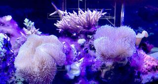 水族館の写真・画像素材[2641480]