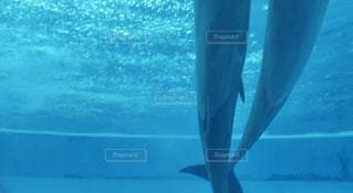 水族館のイルカの写真・画像素材[2641481]