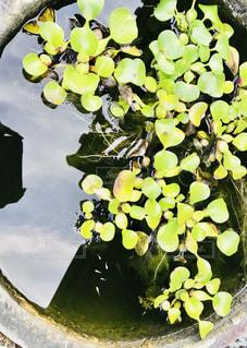 水面の写真・画像素材[2650531]