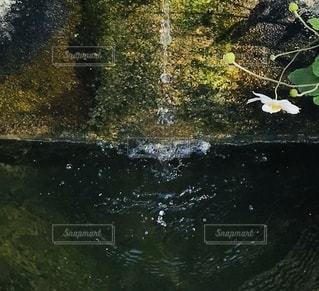池の近くにの写真・画像素材[2689873]
