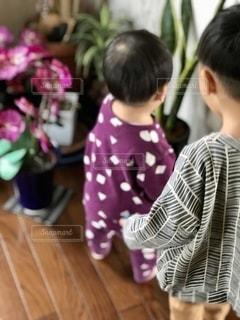 観葉植物に触れる弟の写真・画像素材[2722674]