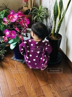 観葉植物を眺める男の子の写真・画像素材[2722676]