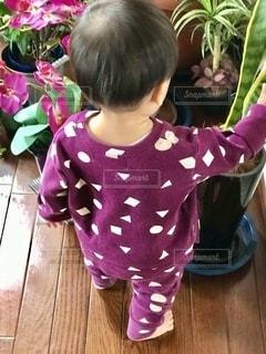 観葉植物と1歳の孫の写真・画像素材[2722690]