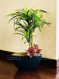 観葉植物の写真・画像素材[2723006]