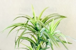 植物のクローズアップの写真・画像素材[2723122]