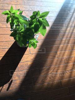鉢植えの写真・画像素材[2723174]