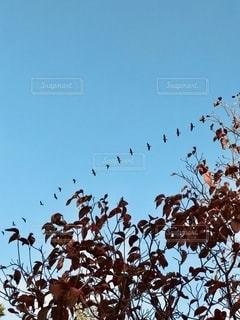 木の上に座っている鳥の群れの写真・画像素材[2793718]