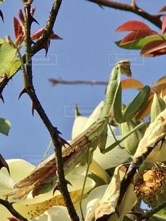 木の枝に座っている鳥の写真・画像素材[2793767]