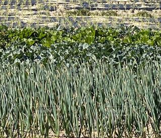 草の畑の写真・画像素材[2813037]