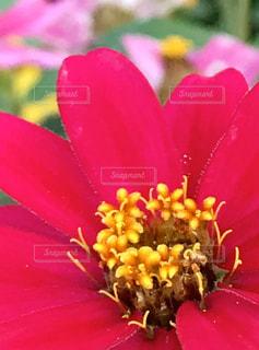 花をクローズアップするの写真・画像素材[2832206]