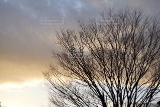 自然,空,屋外,太陽,雲,光,樹木,草木,日中