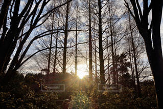 自然,風景,空,屋外,太陽,日光,光,樹木,熱田神宮,草木