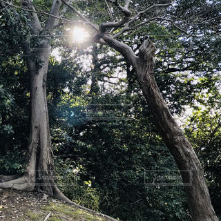 空,公園,森林,屋外,太陽,景色,光,樹木,日陰,草木,木のアーチ