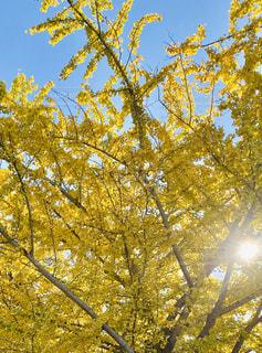空,秋,森林,屋外,太陽,葉,光,樹木,草木