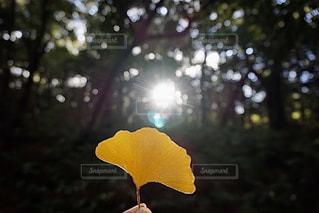 花をクローズアップするの写真・画像素材[2886779]