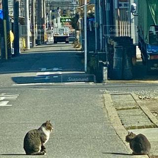 街の通りを歩いている猫の写真・画像素材[2905334]