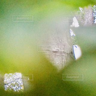緑の葉のクローズアップの写真・画像素材[2994365]