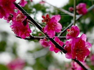 植物の上のピンクの花のクローズアップの写真・画像素材[3022988]