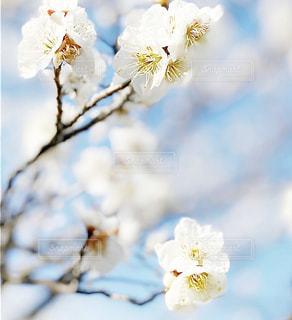花のクローズアップの写真・画像素材[3023899]