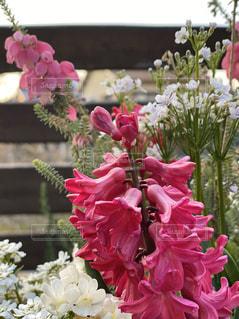 ピンクの花束の写真・画像素材[3033342]