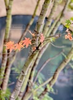 木の枝に座っている鳥の写真・画像素材[3759095]