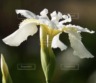 花のクローズアップの写真・画像素材[4360017]