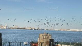 風景,海,空,動物,鳥,屋外,水面,カモメ,桟橋,群れ,眺め
