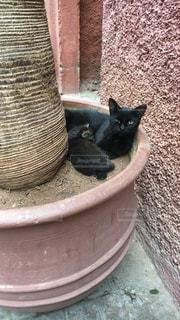 親子猫の写真・画像素材[1260609]