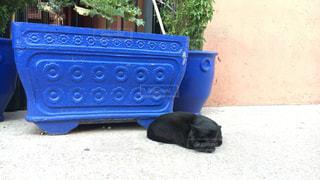 黒猫 と 青の写真・画像素材[1260610]
