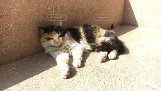 日向ぼっこ 猫の写真・画像素材[1260612]