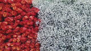 パリ マルシェの花の写真・画像素材[1404229]