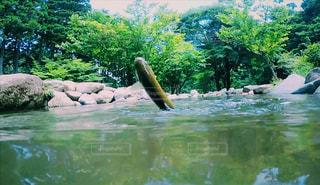 魚釣りの写真・画像素材[648290]