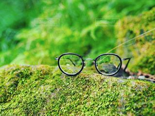 キャンプ眼鏡の写真・画像素材[1385452]