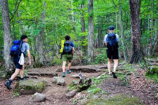 森の人々 のグループの写真・画像素材[1416306]