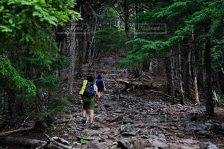 金峰山のトレッキングの写真・画像素材[1417269]