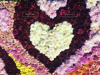 近くの花のアップ - No.853069